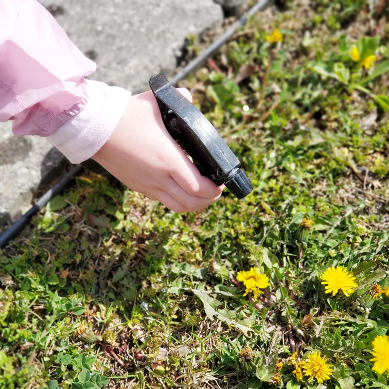 A child's hand spritzes dandelions with water using a spray bottle