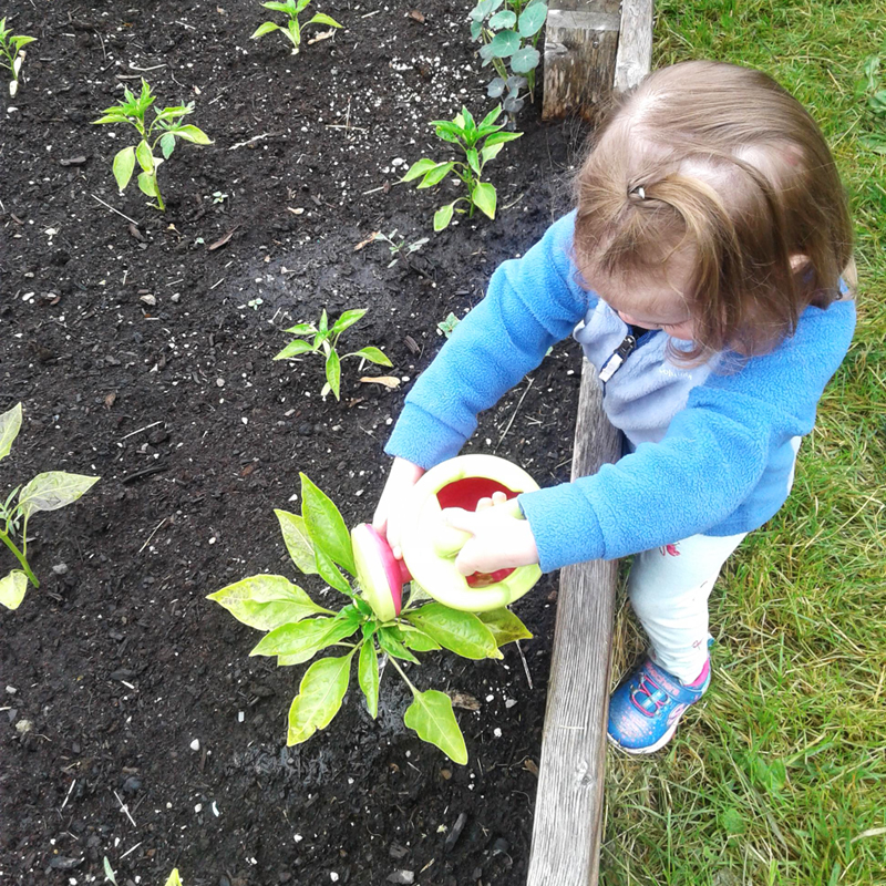 A toddler waters a plant in the garden