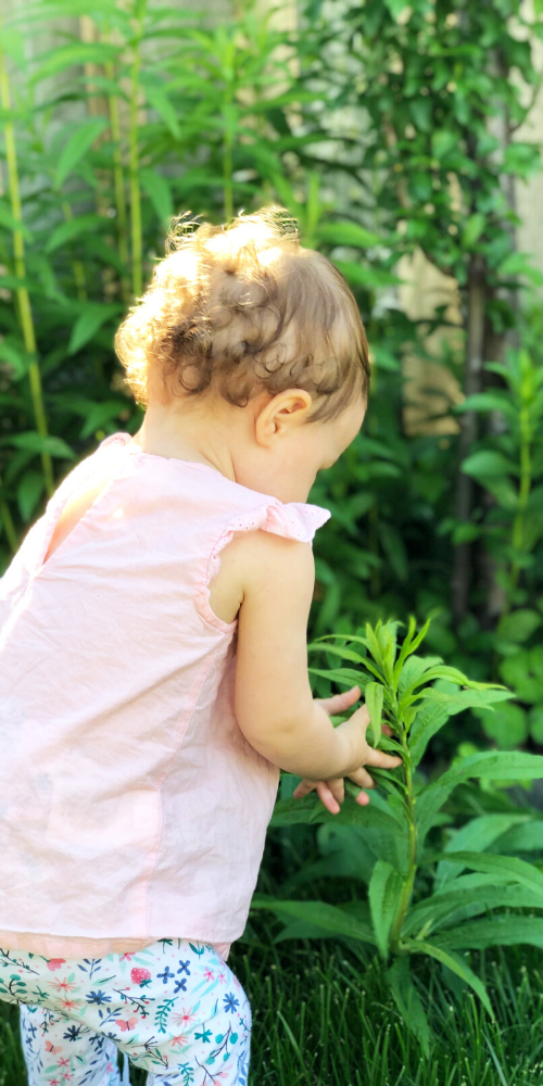 A toddler explores the outdoors by touching a plant in the garden